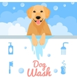 Dog wash vector image