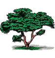 Sketch of a tree vector image
