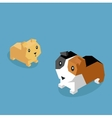Pets Guinea Pig Icon Isometric 3d Design vector image