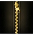 Zipper gold vector image vector image