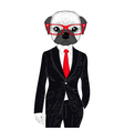 brutal french bulldog in elegant classic suit Hand vector image