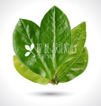 Green leaves - eco vector image
