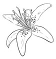 sketch of flower vector image