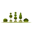 set garden topiary vector image