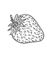 sketch of the strawberry vector image