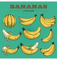 banana sethand drawn bananas vector image