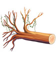 wooden log with vine vector image