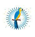 macaw bird icon vector image