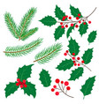 fir tree branches mistletoe leaves and berries vector image