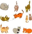 a set with the image colored cats vector image