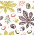 decorative chestnut pattern vector image