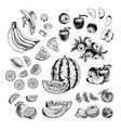 hand drawn set of fruits sketch vector image
