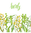 seamless border with herbs and cereal grass vector image