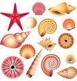 shells set vector image
