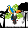 toucan and macaw birds vector image