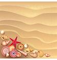 shells sand vector image