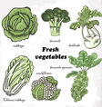 Set of cabbages - cauliflower Chinese cabbage vector image