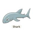 Shark sea animal fish cartoon vector image
