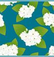 arabian jasmine on indigo blue background vector image