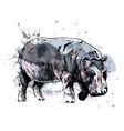 Colored hand drawing of a hippopotamus vector image