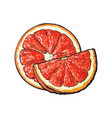half and quarter of ripe pink grapefruit hand vector image