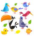 cute cartoon birds collection vector image