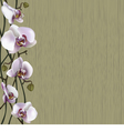 Green background with white orchid flowers vector image