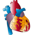 of the human heart vector image vector image