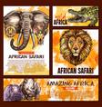 zoo sketch poster wild african animal vector image