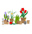 spring bulbous flowers vector image vector image