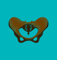 flat shading style icon pelvic bones vector image