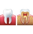 tooth cut vector image