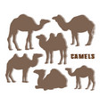 camel silhouettes set vector image