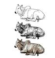 Resting white cowAmerican Brahman vector image