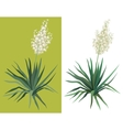 Flowering plant Yucca vector image