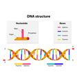 DNA structure vector image