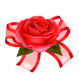 rose with gift vector image vector image