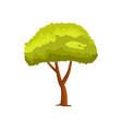 pine green tree icon vector image
