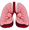 Bronchial system human lungs vector image