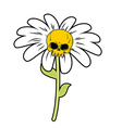 Flower of death Chamomile with skull Head skeleton vector image
