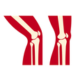 knee anatomy vector image vector image