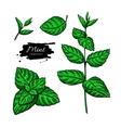 Mint drawing set Isolated plant and leaves vector image