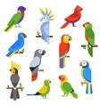 Cartoon parrots set and parrots wild animal birds vector image
