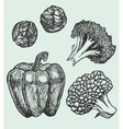 set of hand-drawn vegetables vector image