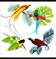 colorful birds of paradise sitting on branches vector image