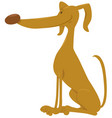 cute dog cartoon animal vector image