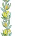 Olive border vector image