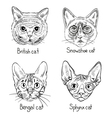 Drawing cats icons vector image vector image