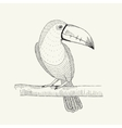 Hand drawn of toucan bird on the vector image