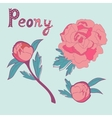 Elegant collection of handdrawn peonies vector image